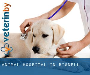 Animal Hospital in Bignell