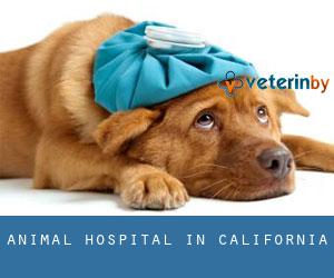 Animal Hospital in California