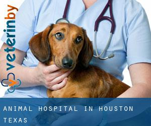 Animal Hospital in Houston (Texas)