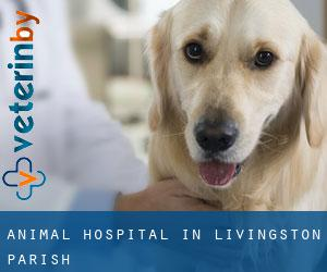 Animal Hospital in Livingston Parish