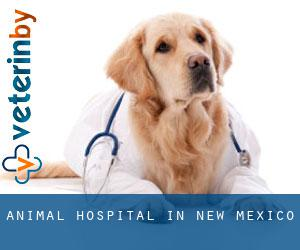 Animal Hospital in New Mexico