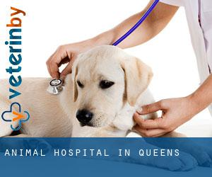 Animal Hospital in Queens