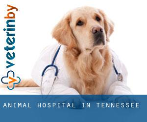 Animal Hospital in Tennessee