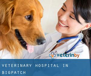 Veterinary Hospital in Bigpatch
