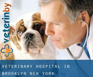 Veterinary Hospital in Brooklyn (New York)