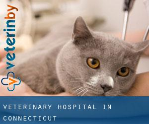 Veterinary Hospital in Connecticut