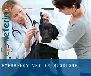 Emergency Vet in Bigstone
