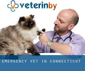 Emergency Vet in Connecticut