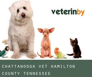 Chattanooga Vet (Hamilton County, Tennessee)