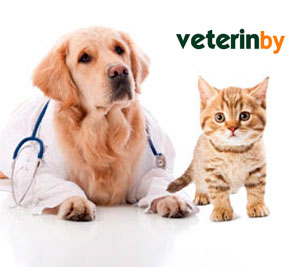 Pet Hospital in New York